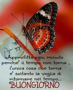 Good Day, Good Morning, Italian Memes, Inspirational Thoughts, Good Mood, Morning Quotes, Luigi, Facebook, Morale
