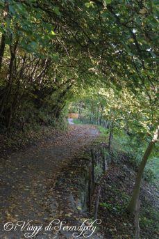 Sentiero dei Castagneti a Castione di Brentonico