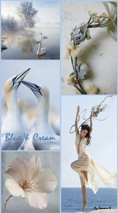 Blue and Cream By Sammie R