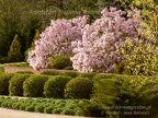 Arboretum Trojanów  (2627 odwiedzin, ocena 4.52) wiosna