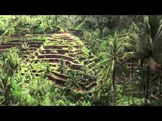 Terence Mckenna - A species addicted - YouTube