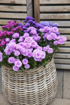 Beautiful World, Beautiful Gardens, Beautiful Flowers, Flower Basket, Flower Pots, All Flowers, Garden Projects, Container Gardening, Outdoor Gardens