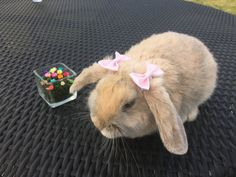 Items similar to Hair bow / Bunny bows for Rabbits and small animals. on Etsy Cute Baby Bunnies, Cute Babies, Animals And Pets, Funny Animals, Small Animals, Indoor Rabbit, Bunny Cages, Pet Rabbit, Small Rabbit