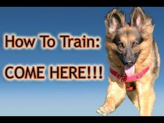 54 videos dog training explained