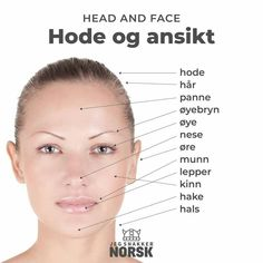 Norwegian parts of the face Sweden Language, Norway Language, World Languages, Foreign Languages, Norwegian Words, Learning Languages Tips, Norway Fjords, Language Study, Scandinavian