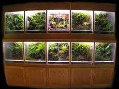 gecko terrarium - Поиск в Google