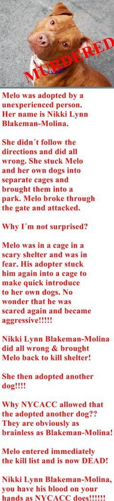 "GONE - 04/06/15 Manhattan Center MELO - A1030097 *** RETURNED 3/21/15 - ""BITE PEOPLE"" *** DOH HOLD 3/21/15 *** https://www.facebook.com/photo.php?fbid=978466668832879"