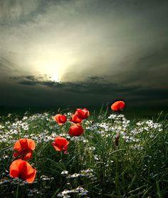 Beauty of dawn or dusk!?