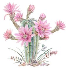 cacti 1 Sticker by Cali dalle - White - The Effective Pictures We Offer You About Cactus painting A quality picture can tell you m. art decoracion dibujo diy garden indoor painting plants drawing appartement bathroom home decor wood room decor Cactus Drawing, Cactus Painting, Cactus Art, Watercolor Succulents, Watercolor Flowers, Watercolor Paintings, Creation Deco, Canvas Prints, Art Prints