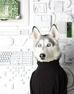 Husky tech :D