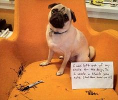 """I was left out of my crate for the day, so I wrote a thank you note and then peed on it"""