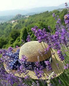 Lavender Cottage, Provence Lavender, Lavender Garden, French Lavender, Lavender Blue, Lavender Fields, Lavender Flowers, Love Flowers, My Flower