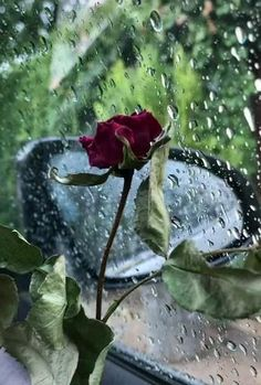 Beautiful Scenery Pictures, Beautiful Photos Of Nature, Cool Girl Pictures, Beautiful Gif, Moonlight Photography, Rain Photography, Aesthetic Photography Nature, Wallpaper Nature Flowers, Beautiful Nature Wallpaper