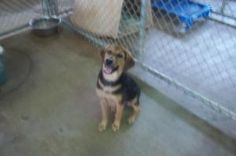 Harley is an adoptable Hound Dog in Johnson City, TN. Female dogs are 95.00. Male dogs are 80.00. This pays for their spay or neuter. If they are already spayed or neutered, they are only 35.00! For m...