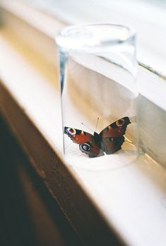 """""""she was a butterfly, and her life was an open window."""""""