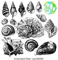 Vector - Conchas marinas - stock de ilustracion, ilustracion libre de, stock de iconos de clip art, logo, arte lineal, retrato de EPS, Retratos, gráficos, dibujos gráficos, dibujos, imágenes vectoriales, trabajo artístico, Arte Vectorial en EPS