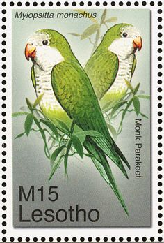 Monk Parakeet stamps - mainly images - gallery format