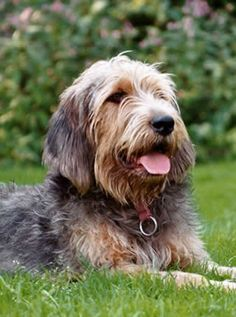 Otterhound suited for Simbae's Long Haired Shampoo & Conditioner