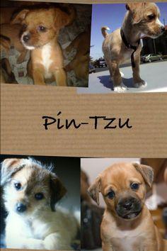 Pin-Tzu