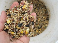Sprouted Grain for farm animals