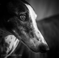Black and White Sunday – Beryl Doesn't Rock