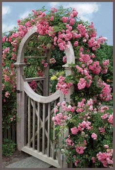 An abundance of pink climbing roses adorn this charming garden gate.