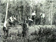 69 Boswerkers poseer by gevelde groot inheemse boom Oos Kaapaa East India Company, Knysna, Archaeology, Old Photos, South Africa, Evolution, African, History, Cape Town