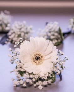 Boutonierre  baby's breath for the bridal party baby's breath + gerbera daisy for the groom.