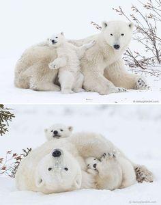 15 Mamans ours qui enseignent à leurs oursons comment faire l'ours - Qc LifeStyle | La référence pour profiter de la vie!