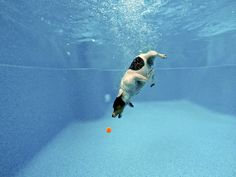 Peter Csonka photographs his pup fetching underwater.