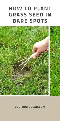 How To Plant Grass Seed In Bare Spots - Best Home Gear Bare spots in your lawn are almost inevitable Best Grass Seed Lawn, Planting Grass Seed, How To Plant Grass, How To Grow Grass, Growing Grass From Seed, Dyi, Lawn Repair, Bermuda Grass, Lawn Care Tips