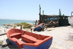 Fossils, West Coast, Tours, Beach, Travel, Animals, Viajes, Animales, The Beach
