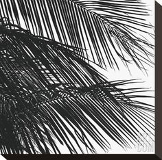 Palms, no. 4 (detail) Stretched Canvas Print by Jamie Kingham at Art.com