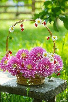 Rainbow Fields of Flowers Flowers Gif, Beautiful Rose Flowers, Beautiful Gif, Butterfly Flowers, Summer Flowers, Flower Images, Flower Pictures, Gif Bonito, Gif Animé