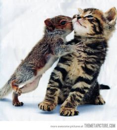 squirrel kisses
