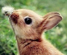 Cute. Cute. So cute.