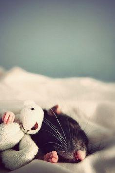 Rat nap <3 <3 <3 <3 <3