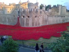 A poppy for every soldier who died in WWI