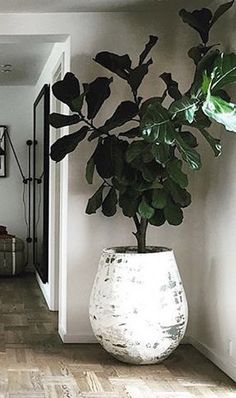 37 Best Indoor Plants Decoration to Copy Right Now Most plants don… 37 Best Indoor Plants Decoration to Copy Right Now Most plants don't require direct sunlight and water daily. A wonderful solution can be to just get an indoor plant. Decor, Interior Plants, Pinterest Plant, House Interior, Indoor, Interior, House Plants Indoor, Home Decor, Plant Decor