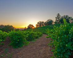 Sunset and Vine by Mark Zukowski, via Flickr