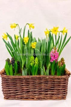 Bulb Garden. The best of spring in one basket.