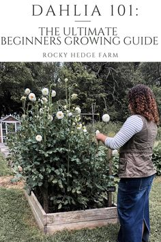Learn how to plant dahlia tubers, grow and care for dahlias in your own garden, in this step-by-step guide. Dahlias make excellent cut flowers for bouquets and arrangements, and are very easy to grow! Planting Dahlias, Growing Dahlias, How To Grow Dahlias, Cut Flower Garden, Flower Farm, Outdoor Landscaping, Outdoor Gardens, Dahlia Flower, Garden Projects