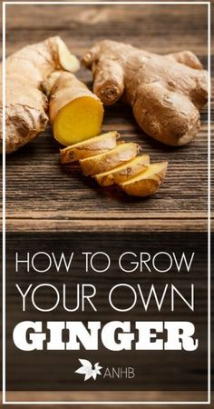 Learn how easy it is to grow ginger inside your own home! #countrysidemag