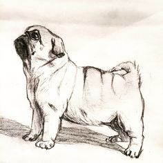 Raise the Gates Cool Art Drawings, Realistic Drawings, Art Drawings Sketches, Animal Sketches, Animal Drawings, Kitten Drawing, Pug Tattoo, Cute Pug Pictures, Pug Art