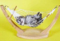 Kitty Hammoc
