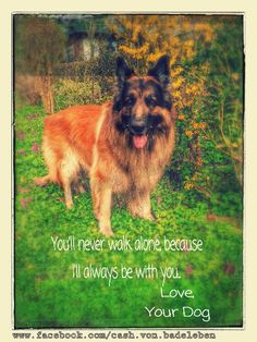 You'll never walk alone,because  I'll always be with you.  Love,  Your Dog  Join Us at www.facebook.com/cash.von.badeleben