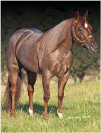 Inktastic Percheron Horse Lover Gift Idea Men/'s V-Neck T-Shirt Horses Animals By