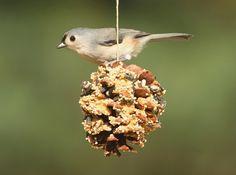 krmítko pro ptáky, jak vyrobiit krmítko, ptačí krmítka, návod na krmítko