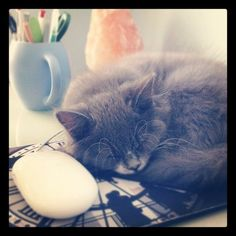 """""""To be happy at home is the result of all ambition."""" ~ Samuel Johnson (Extract from Housework Blues - A Survival Guide) Happiness Study, Space Matters, Clean Book, Ode To Joy, Sleeping Kitten, Cox And Cox, Cat Mouse, Positive Psychology, Life Design"""