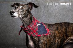 Tula and the Tartan red/Jean Civic Dog® scarf, square pocket. http://civicdog.com/product/tuli-pañuelo-civic-dog-tartan-rojo-jean